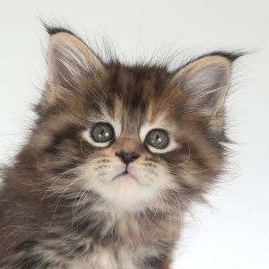 gatti in sala posa