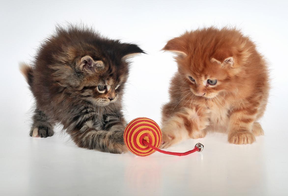 gattino-che-giocano